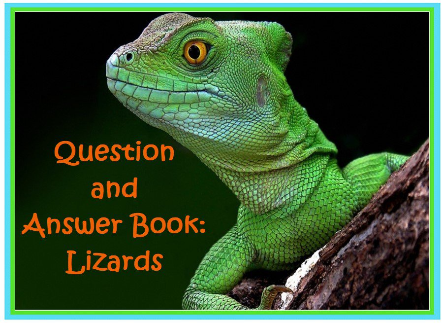 Question and Answer Book: Lizards