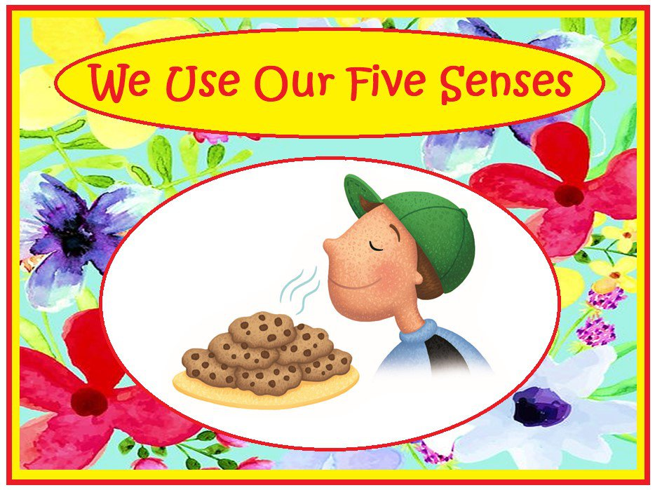 We Use Our Five Senses