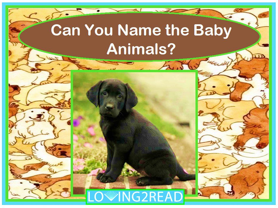 Can You Name the Baby Animals?