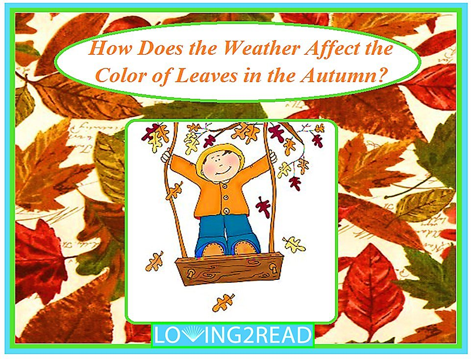 How Does the Weather Affect the Color of the Leaves in Autunm?