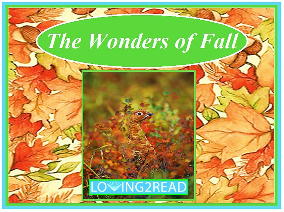 The Wonders of Fall