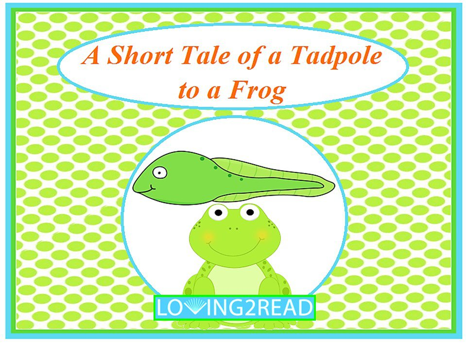 A Short Tale of a Tadpole to a Frog