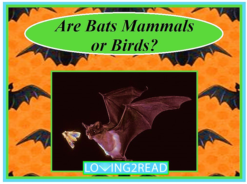 Are Bats Mammals or Birds?