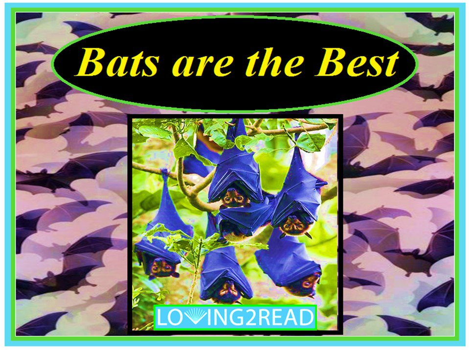 Bats are the Best
