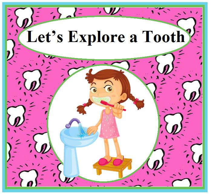 Let's Explore a Tooth