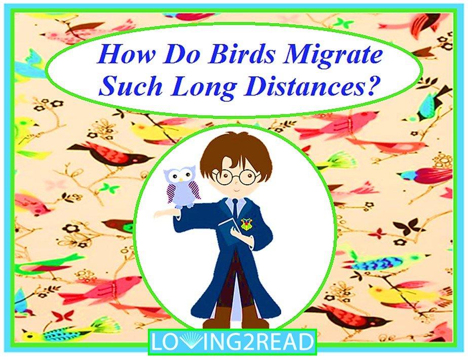 How Do Birds Migrate Such Long Distances?