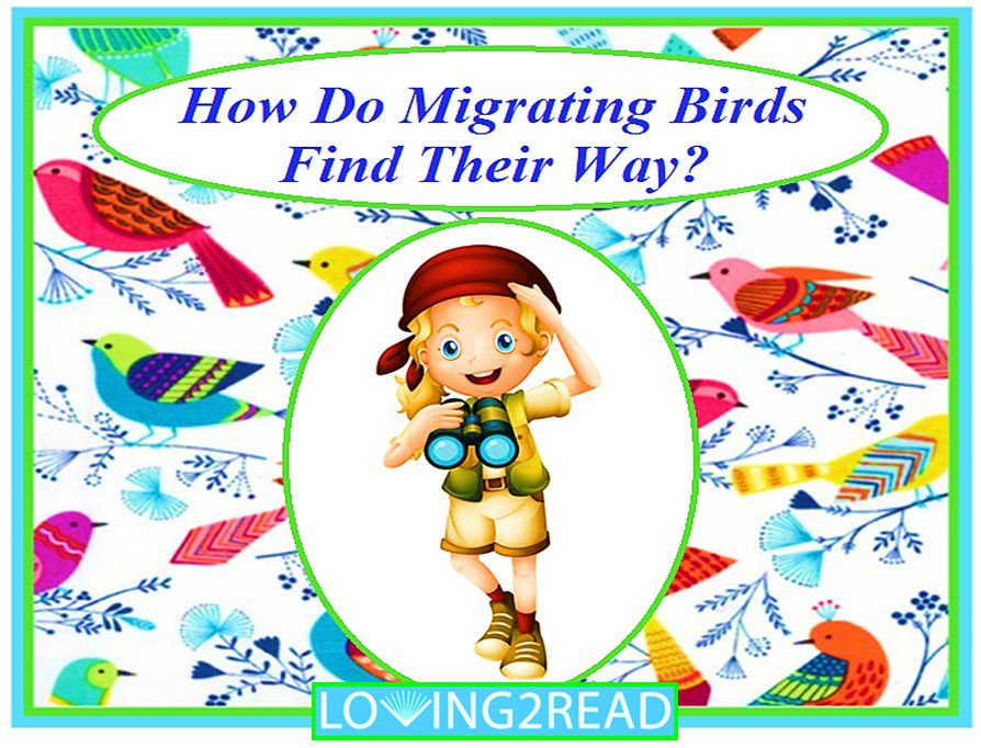 How Do Migrating Birds Find their Way?