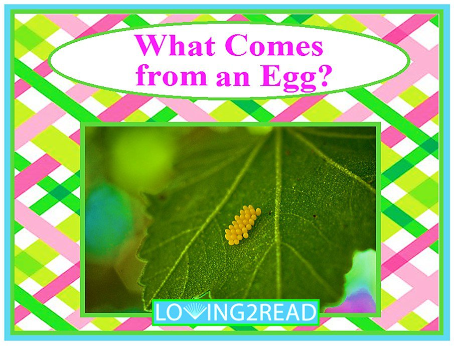 What Comes from an Egg