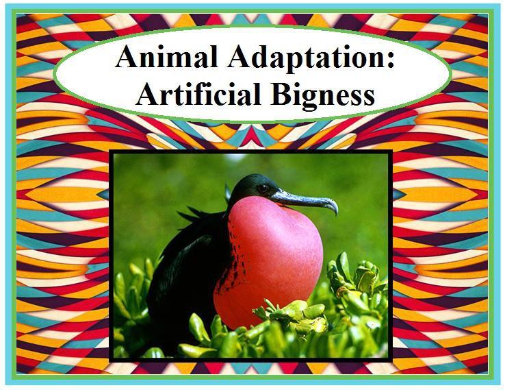 Animal Adaptation: Artificial Bigness