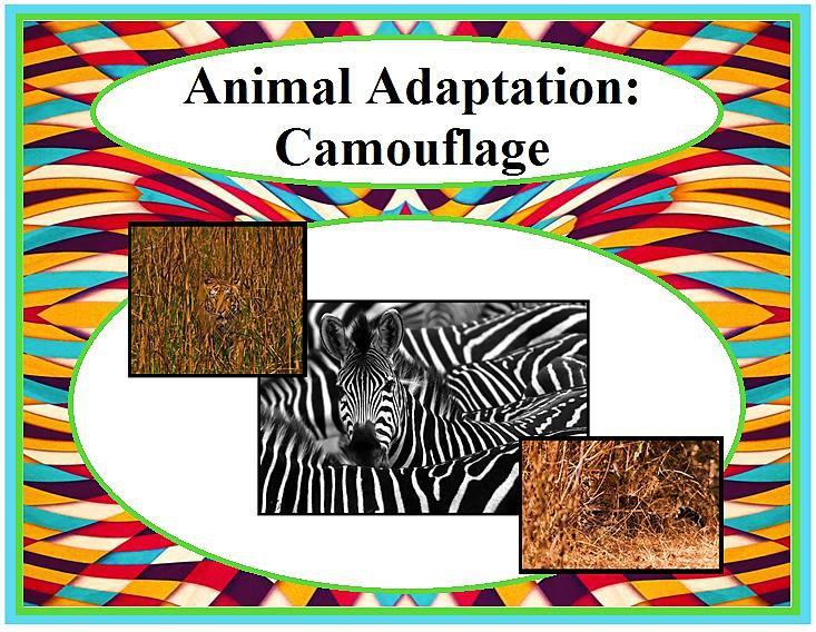 Animal Adaptation: Camouflage