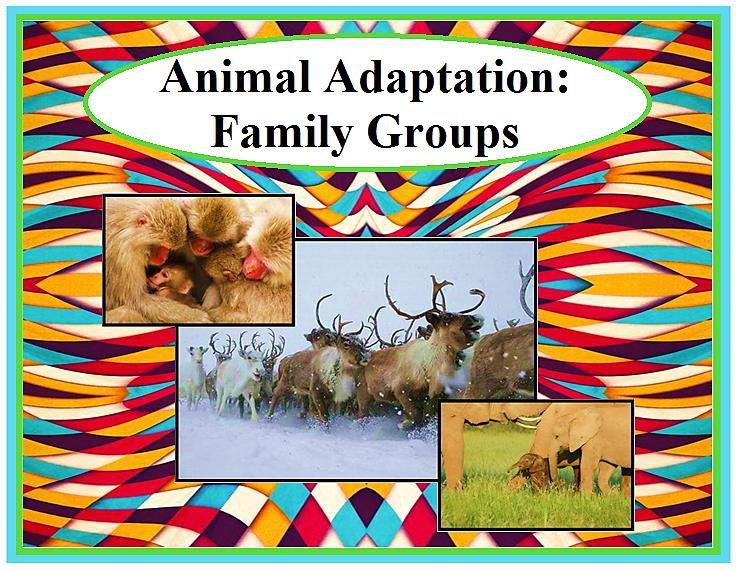 Animal Adaptation: Family Groups