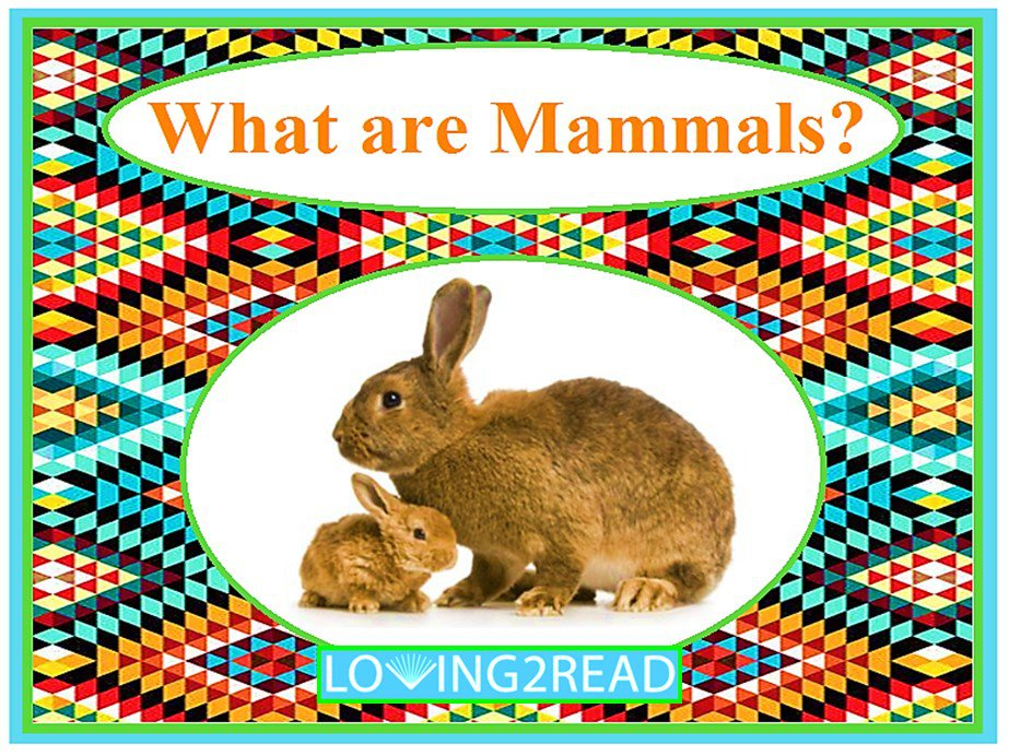 What are Mammals?