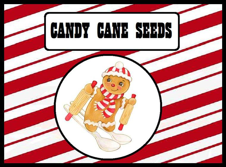 Candy Cane Seeds