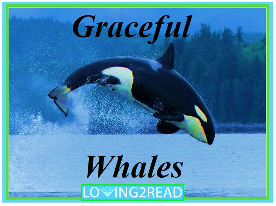 The Graceful Whales