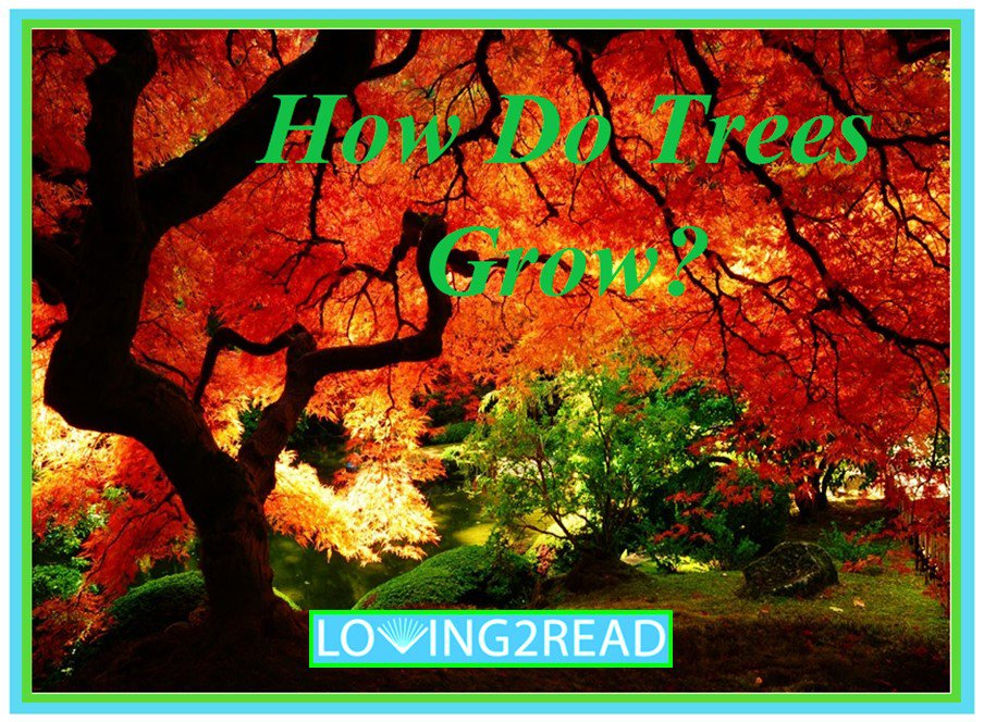 How Do Trees Grow?
