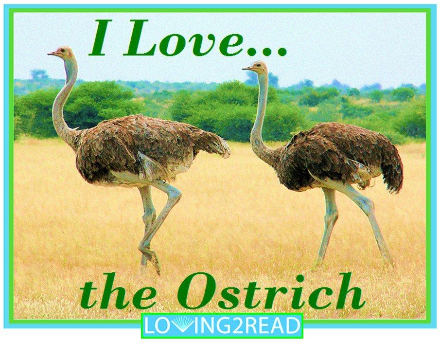I Love the Ostrich