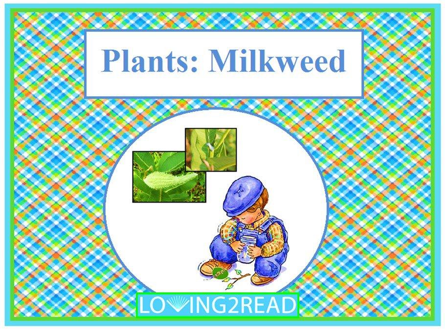 Plants: Milkweed