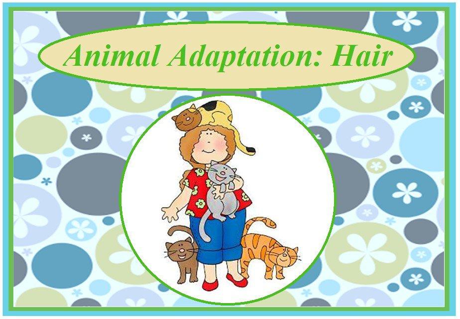 Animals Adaptations:  Hair