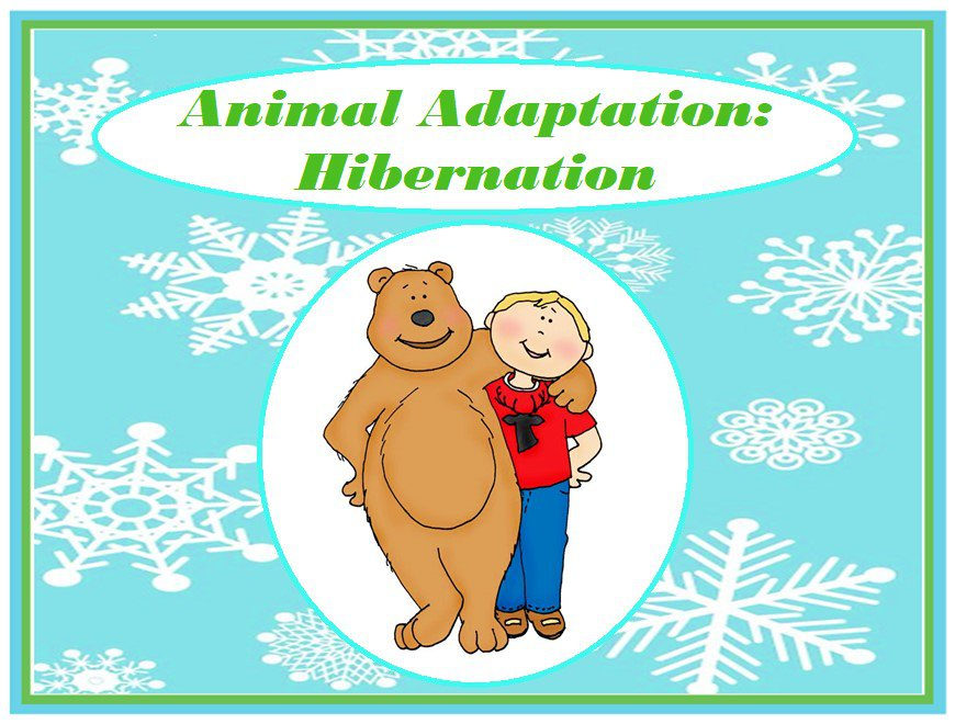 Animal Adaptations: Hibernation